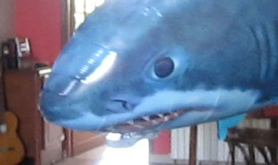 A shark in the living-room